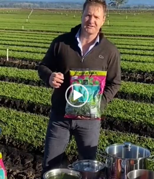 Jeremy Haw of Hussey and Co show how easy it is to prepare spinach soup