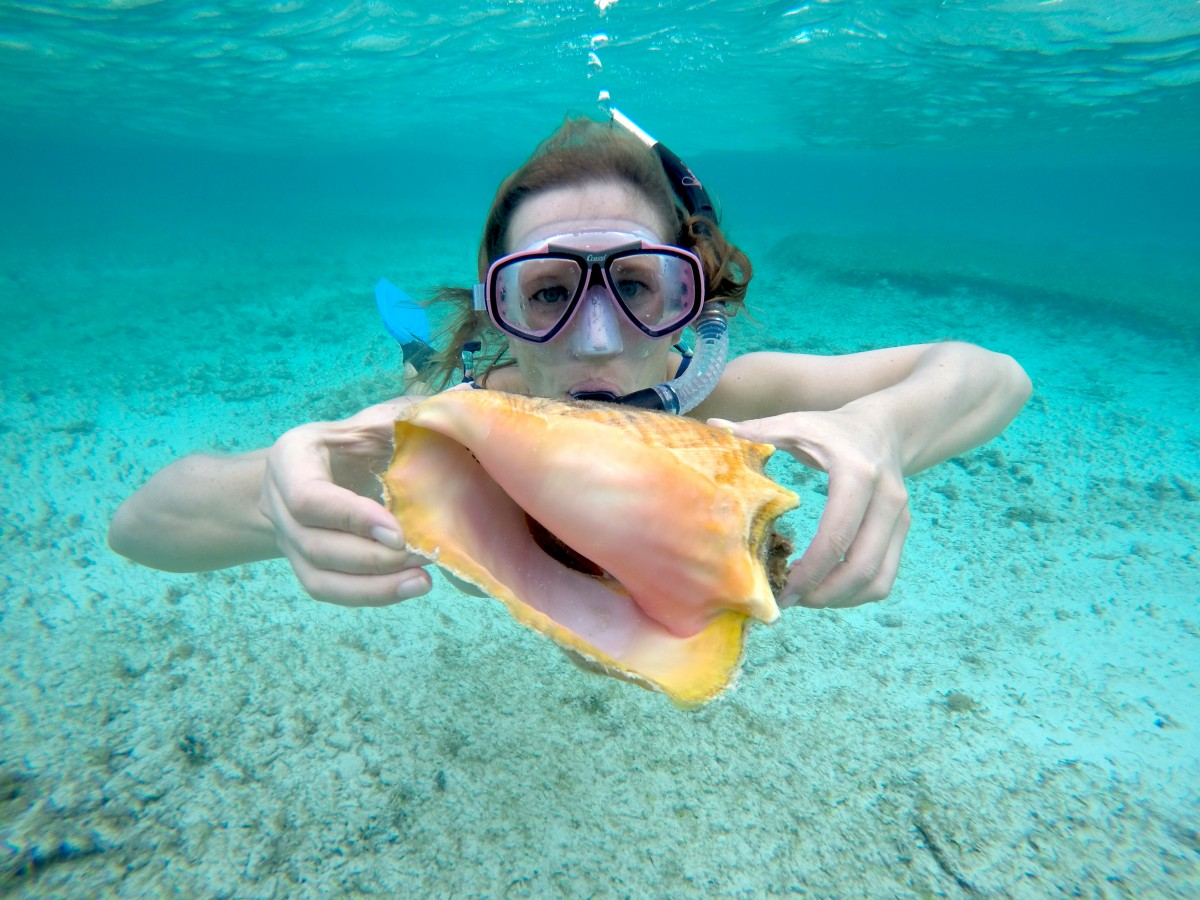 Queen, conch, shells. Cayman, Island