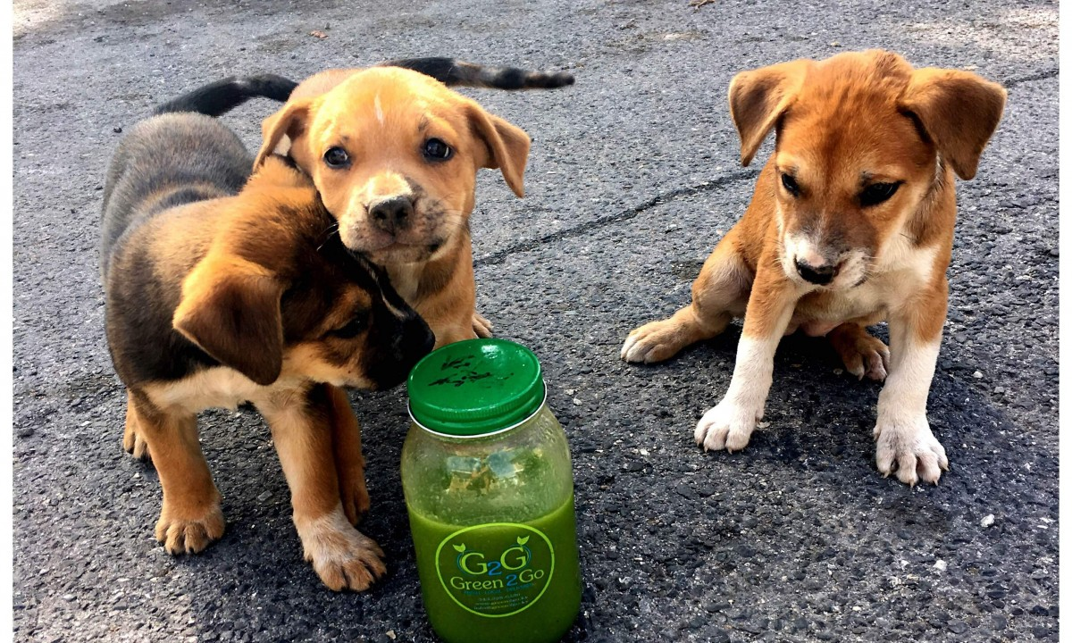 Even the dogs like salad smoothies