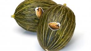 Piel de Sapo-Melone