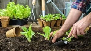 Coltivare la lattuga in casa… si può! (Ed è anche facile!)