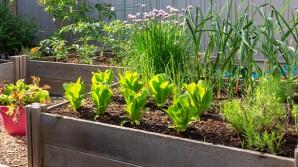 Cura il tuo orto anche a distanza quando sei in vacanza!