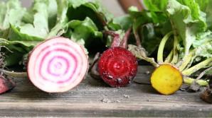 Czym jest tak na prawdę organiczna uprawa?