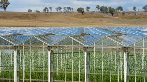 What does 'glasshouse grown' mean?