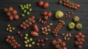 Soorten tomaten: van Roma tomaten tot Coeur de Boeuf