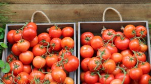 7 reasons to love truss tomatoes