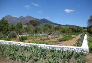 The garden at Babylonstoren, Cape Town – worth a visit!