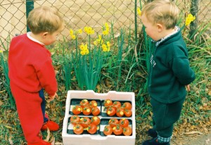 Inspecting the tomatoes