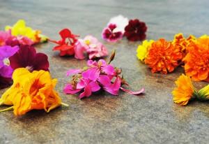 fiori_eduli