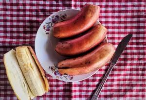 La Red banana di Cuba: un frutto da assaggiare, un'isola da scoprire