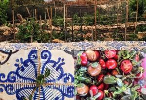 """'A Purciddana di Levanzo, ovvero storia di una pianta """"infestante"""" per insalate gourmet e non solo"""