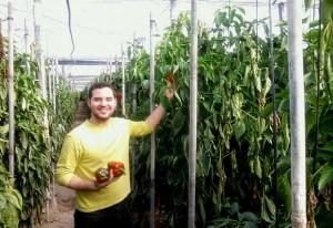 La agricultura en Almería, la huerta de Europa