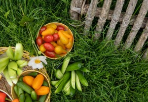 10 vegetable gardening tips