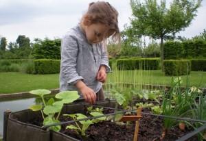 荷兰超市组织小朋友学习种植蔬菜