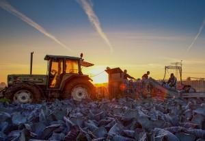 Goed bezig! NL boeren en tuinders laagste milieu-impact ter wereld