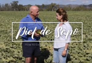A video to explain how to pick a ripe Piel de Sapo melon, Love my Salad, Australia