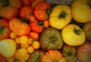 Cultivo de tomates ecológicos. Mi gran pasión.