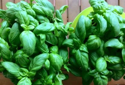 10 erbe aromatiche facili da coltivare sul proprio terrazzo