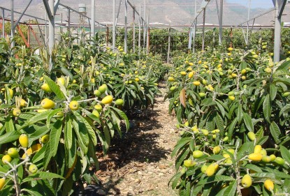 Salud tropical en el Mediterráneo