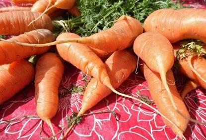 Propiedades de la zanahoria y su versatilidad en la cocina