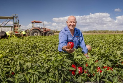 Des Chapman of Rocky Ponds Produce, Gulmu, Queensland.