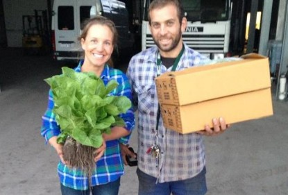What does it take to grow salad greens?