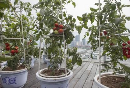 ¡Cultiva tus propias verduras!