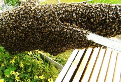 Benefícios do mel na saúde
