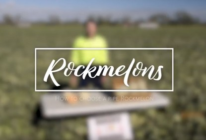 Evan Chapman of Rocky Ponds Produce, Gumlu, Australia, on how to pick the perfect rockmelon