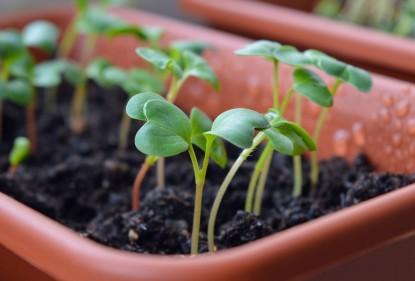 Zaadjes gekiemd? Geef nu je plantjes de ruimte!