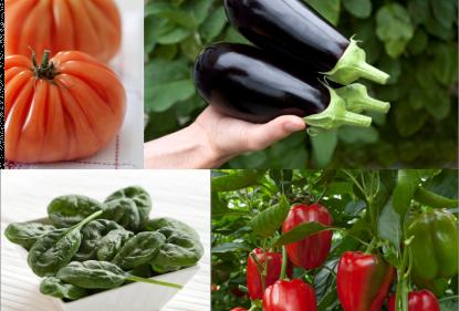 Le printemps des légumes