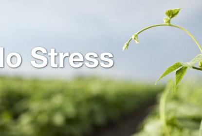 Заїдаємо стрес правильно