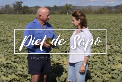 A video to explain how to pick a ripe Piel de Sapo melon, Love my Salad, Australia