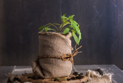 ¿Qué es ecológico?