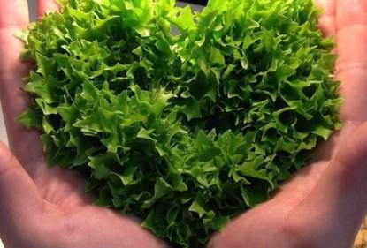 Love your veggies! Groente bij je ontbijt, lunch of tussendoortje.
