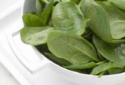 Baby spinach salad seeds