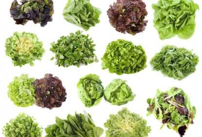 ¿Conoces las propiedades de la lechuga y sus variedades?