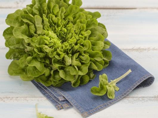 Cómo mantener las hojas de lechuga frescas y verdes