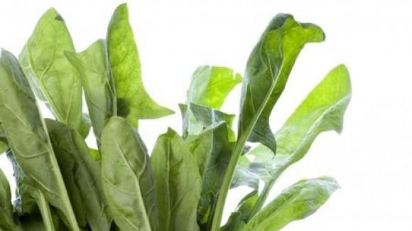 Proprietà degli spinaci. La vera storia di Braccio di Ferro