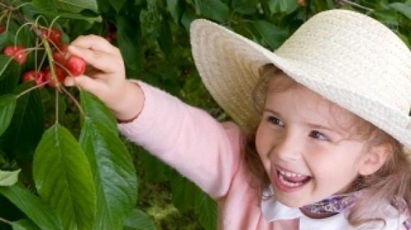 Season for cherries in Australia