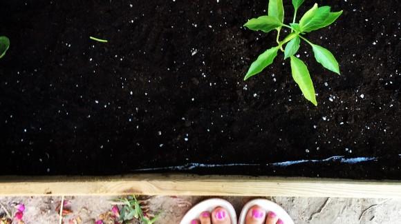 Cultivar en otoño, cosa de niños