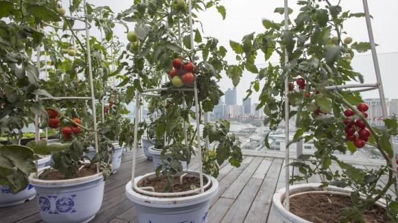 Crea il tuo orto personale!
