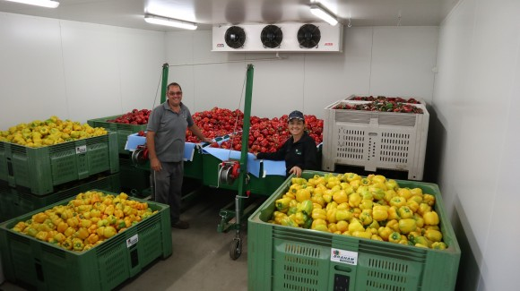 Meet the grower: Braham Produce
