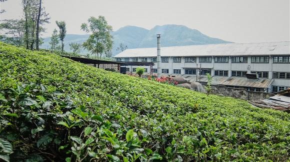 Sri Lanka: isola di ortaggi, fragole e té (seconda parte)