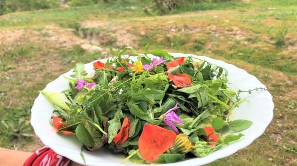 Ensalada buenas malas hierbas