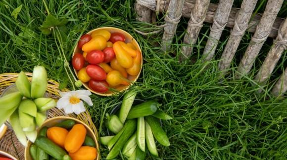 Gemüsegarten, aussäen, pflanzen und ernten