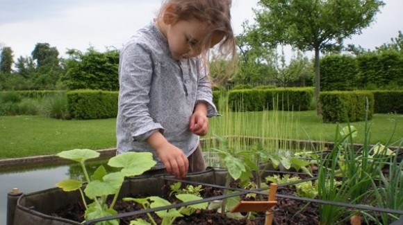 Dutch supermarket helps children to grow vegetables