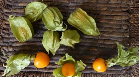 Physalis peruviana : El equilibrio perfecto entre salud y sabor