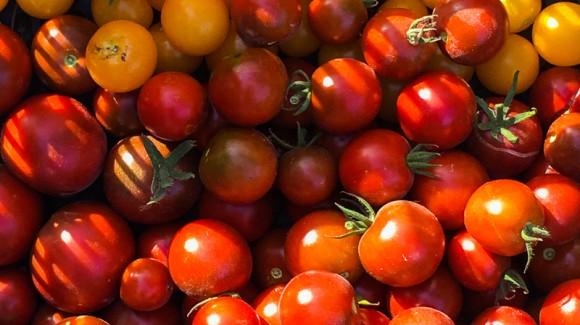 ¡Hora de conservar!  Disfruta de tomates con sabor todo el año