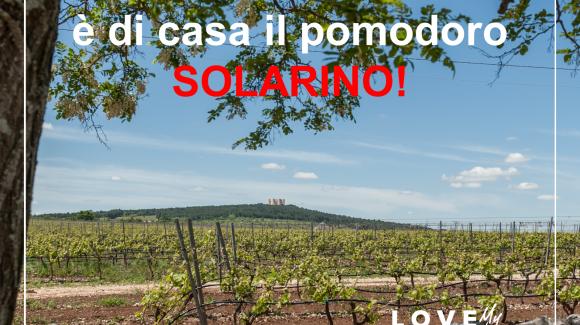Viaggiando in Italia tra colture e culture : pomodoro datterino Solarino RZ, Burrata di Andria e Pane di Altamura nel Parco dell'Alta Murgia